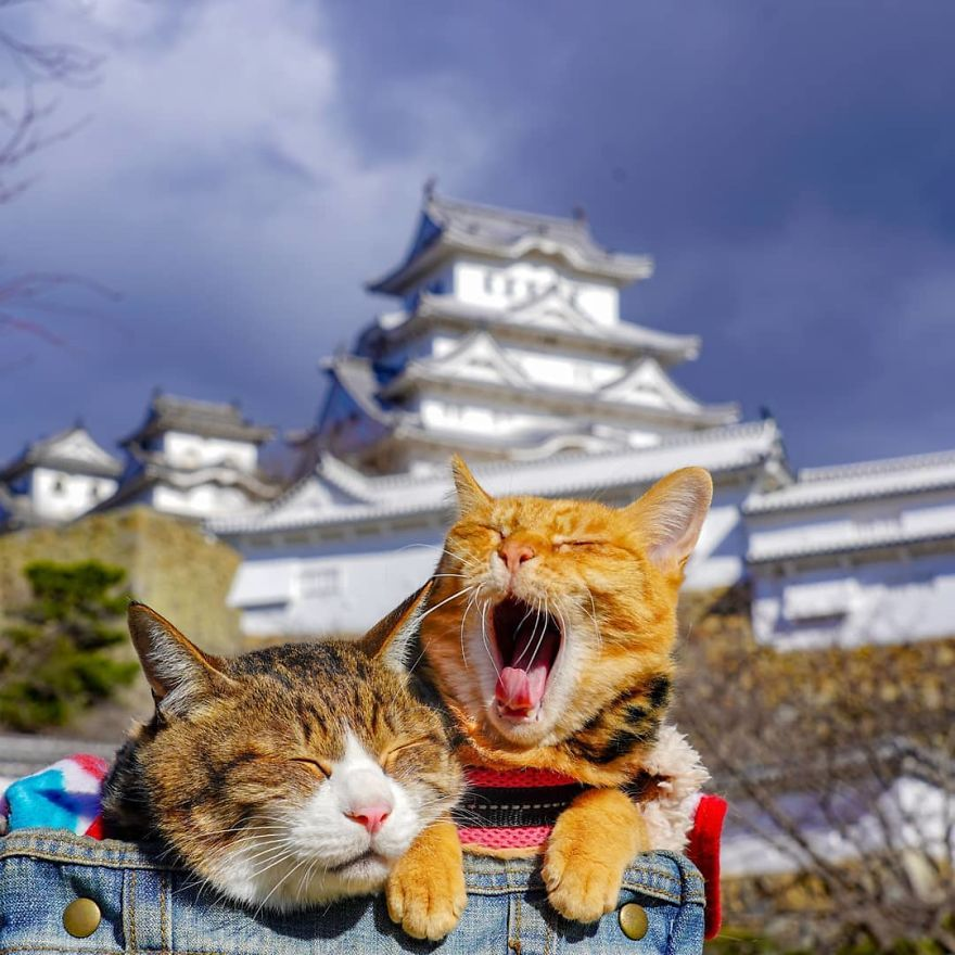 This Man Travels All Over Japan With His Two Kittens And The Images Of His Instagram Are Purrrfect