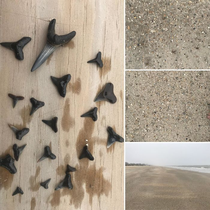 Finding Sharks Teeth, Like A Needle In A Haystack. Crystal Beach, Tx.
