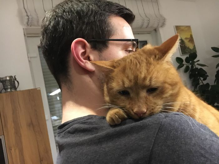 My Boyfriend Is Comforting Our Cat, He Had A Rough Day