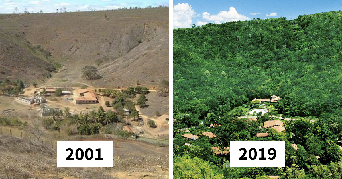 Photographer And His Wife Plant 2 Million Trees In 20 Years To Restore A Destroyed Forest And Even The Animals
