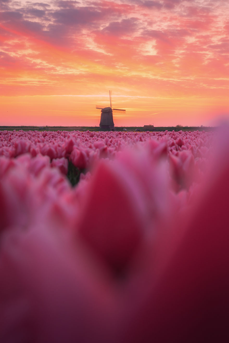 Amazing Footage Of The Dutch Tulips