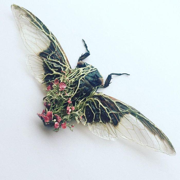 Cicada Art - Camouflage