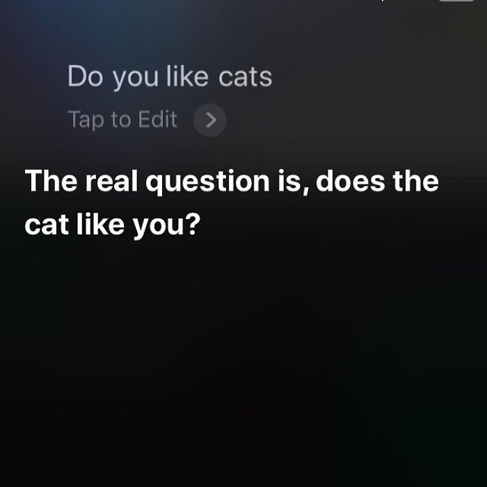 Yes, Siri, The Cats Do Like Me