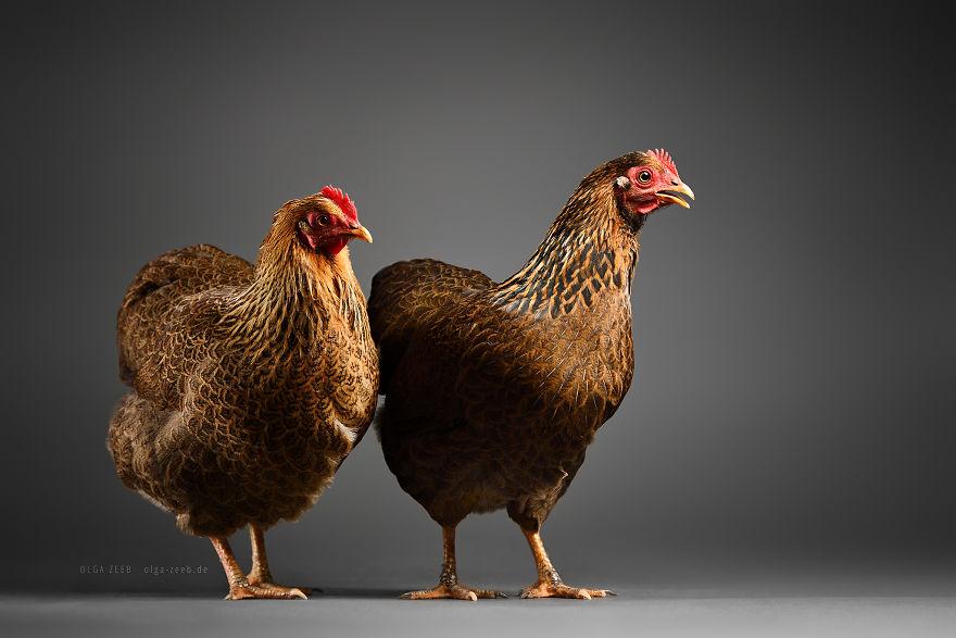 Meet My Chicken Friends! An Extraordinary Visit To The Studio.