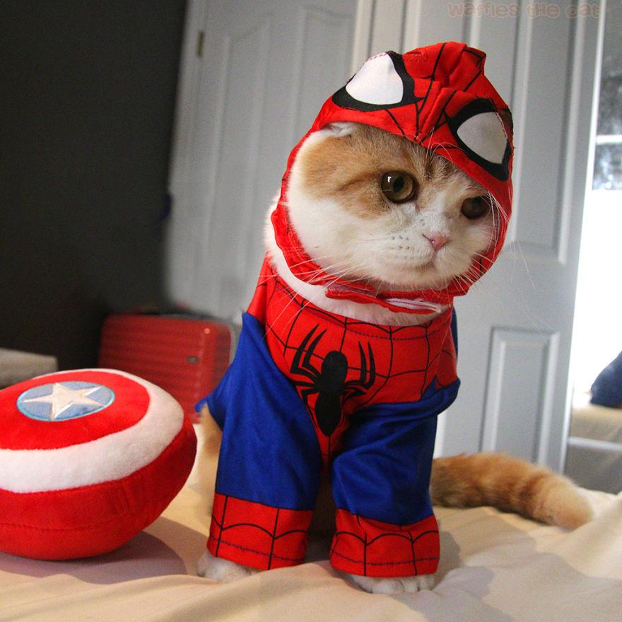 Spider Meown