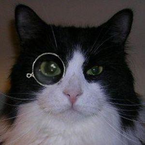 (((Sherlocat))) she/her