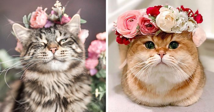 this artist is making flower crowns for animals and they look