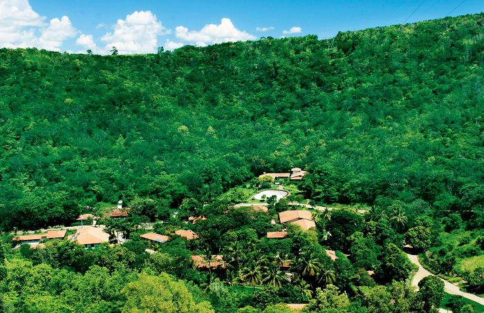 Beautiful huge forest full of green trees Brazil reforestation success
