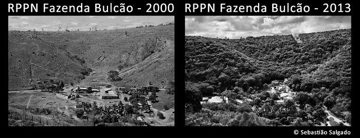 old history reforestation in brazil fazenda bulcao 2000