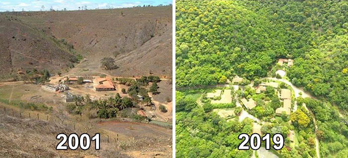 2001 to 2019 reforestation efforts in from Brazilian couple