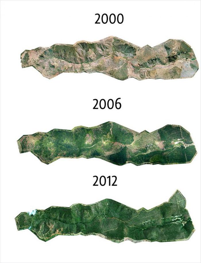 Twelve year reforestation info graphic land map
