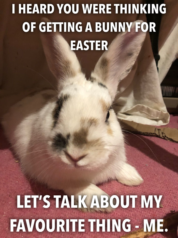 Bunny Owner Explains Why You Shouldn't Get One Before Easter