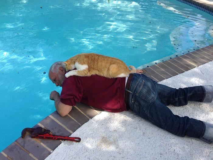 Mi padre arreglando la piscina. Y su gato intentando ayudar