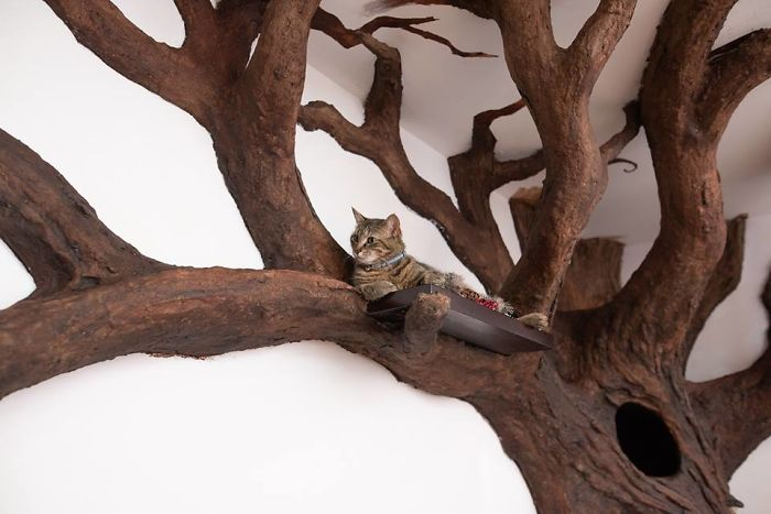 Man Creates Indoor Fake Tree For A Cat, And The Master Approves Of It