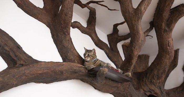 Man Creates Indoor Fake Tree For A Cat And The Master