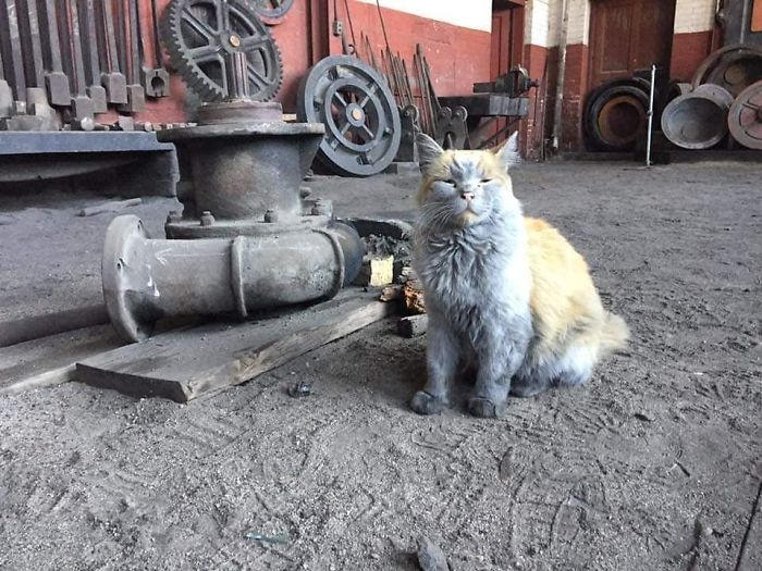 Картинки по запросу кот спит на станке