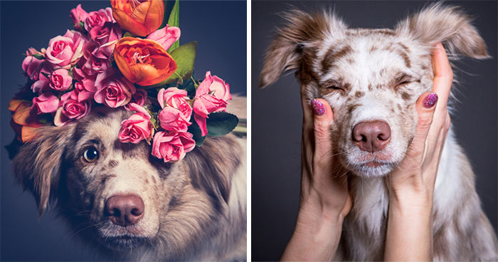 We Capture The Emotions Dogs Express With Their Faces (24 Pics)