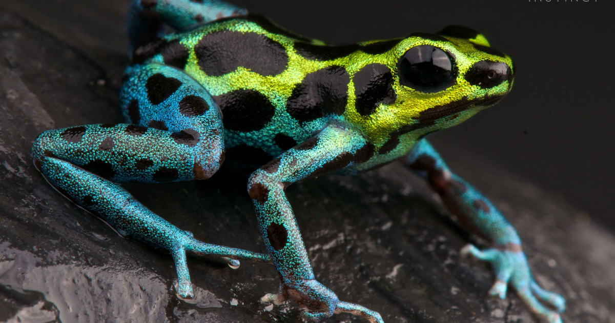 Cute But Deadly. These Flamboyant Creatures Are More Dangerous Than You Think.