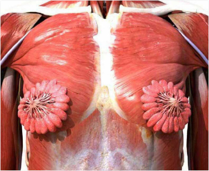 People Can't Believe This Photo Of Female Milk Glands Is Real