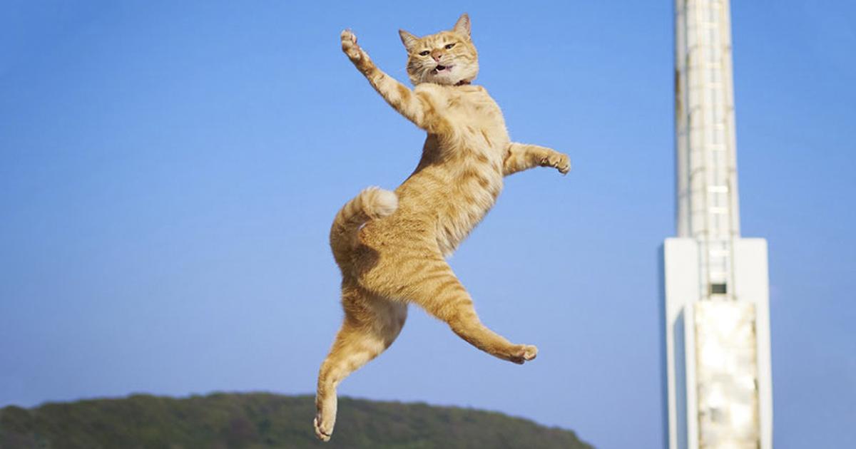 30 Of The Funniest Dancing Cat Pics