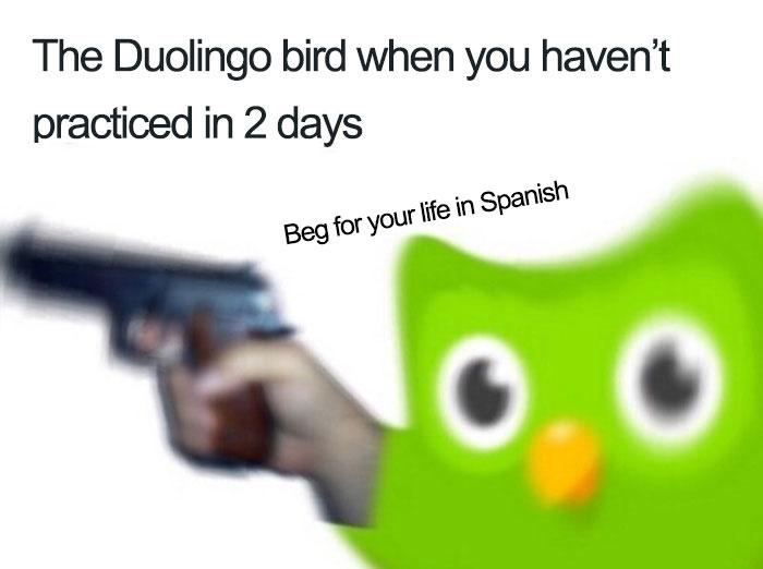 Funny-Duolingo-Bird-Memes