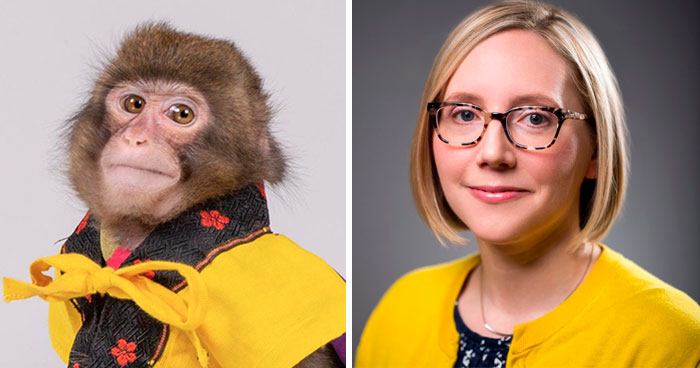 Someone Realizes This Monkey Looks Like Every Journalist And Real Journalists Confirm With 24 Pics