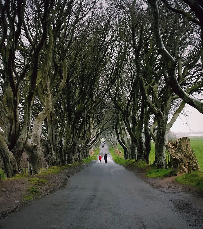 The Kingsroad, Westeros Located In The Dark Hedges, Northern Ireland