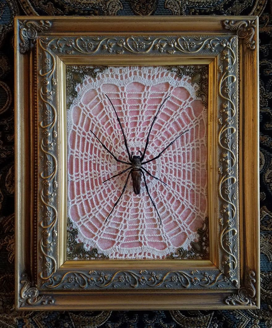 I Create Baroque And Gothic Wall Mounts Out Of Taxidermied Spiders