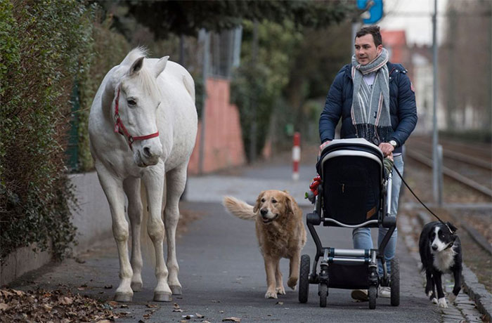 Esta yegua lleva 14 años paseando ella sola cada día, y recibe mimos y comida de los vecinos