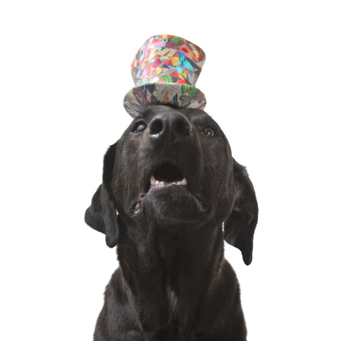 I Make Cute Hats For Dogs Out Of Trash To Prove That All Shelter Pets Deserve A Second Chance (26 Puppy Pics)