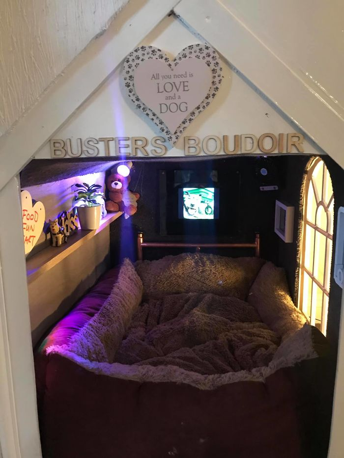 This Dog Has Trust Issues, So The Owner Built A 'Boudoir Bedroom' That Even Has A 'TV', To Comfort Him