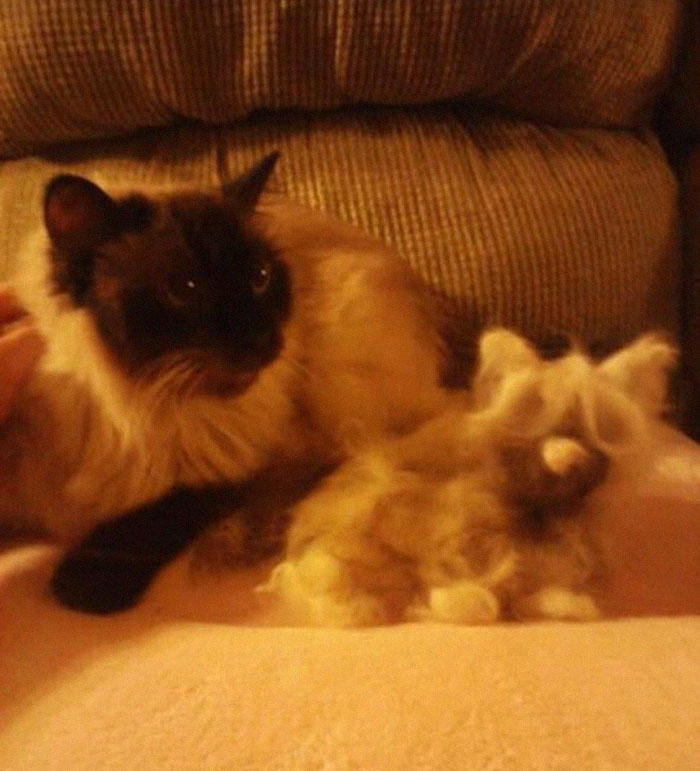 Woman Makes 'A Cat Out Of Her Cat' By Using Cat's Hair And The Result Inspires Others To Do The Same