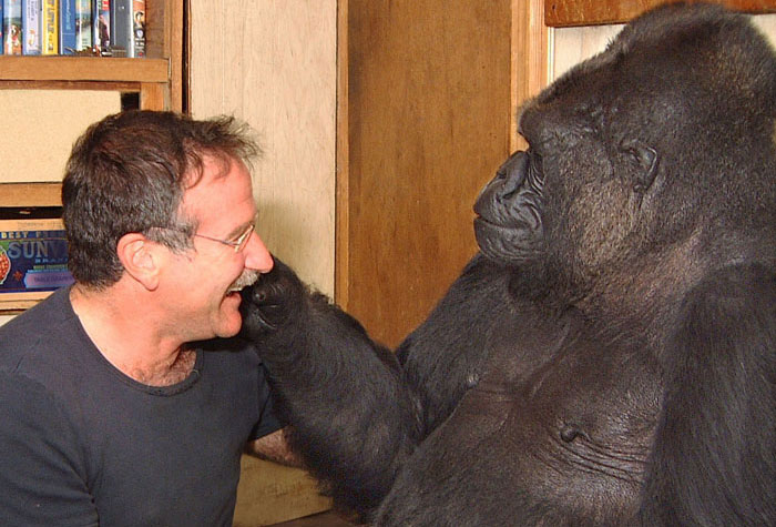"The Gorilla Who Said Animals Go To A ""Comfortable Hole"" When They Die"