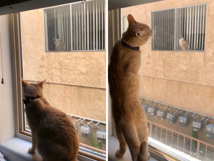 These Two Cats Fell In Love After Seeing Each Other Through