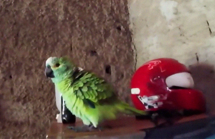 Parrot Goes To 'Jail' After Warning Its Owners About A Police Drug Raid