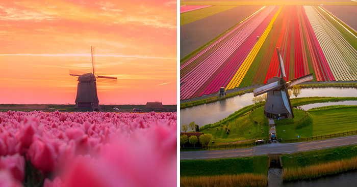I Capture The Captivating Tulip Fields Of My Beautiful Country