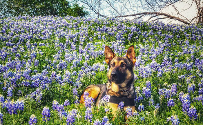 The Texas Bluebonnet Challenge Is Going Viral And Here Are The 30 Best Photos From Police Officers So Far