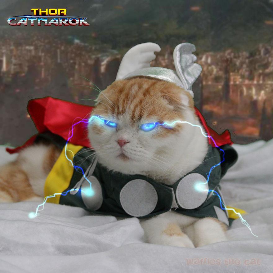 Thor, God Of Thunpurr