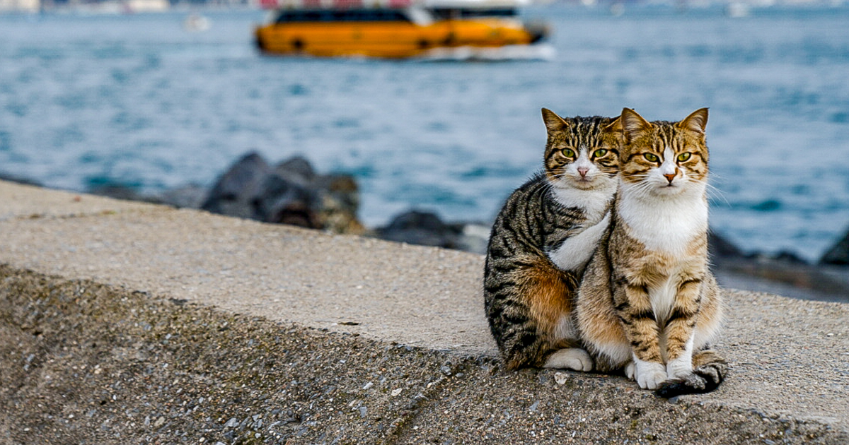 I Photographed Two Stray Cats Cuddling And I Swear This Is Not Staged |  Bored Panda