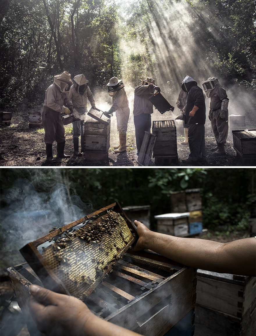 """Environment, Stories, 2nd Prize, """"God's Honey"""" By Nadia Shira Cohen"""