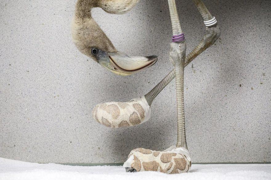 "Nature, Singles, 2nd Prize, ""Flamingo Socks"" By V"