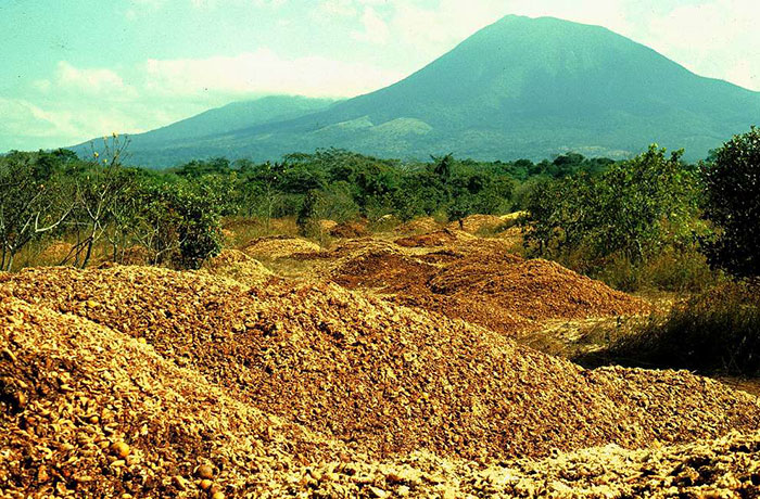 Juice Company Dumped 12,000 Tonnes Of Orange Peels On Virtually Lifeless Soil, 16 Years Later, It Turned Into A Lush Forest
