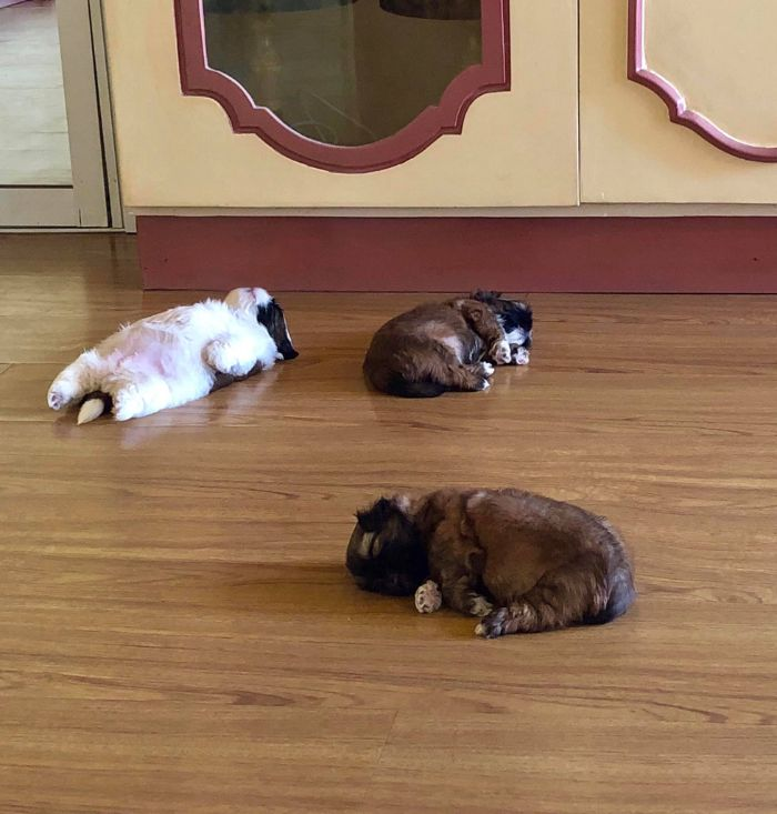 Dog-Laying-Sleeping-Funny-Positions-Mood-The-Real-Paningning