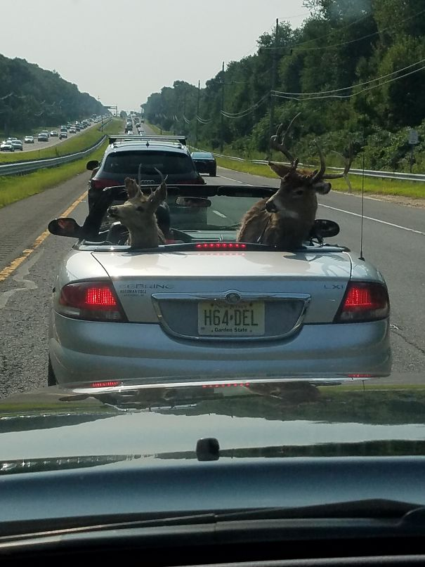 I Was Driving Behind This Today? Stag Party?
