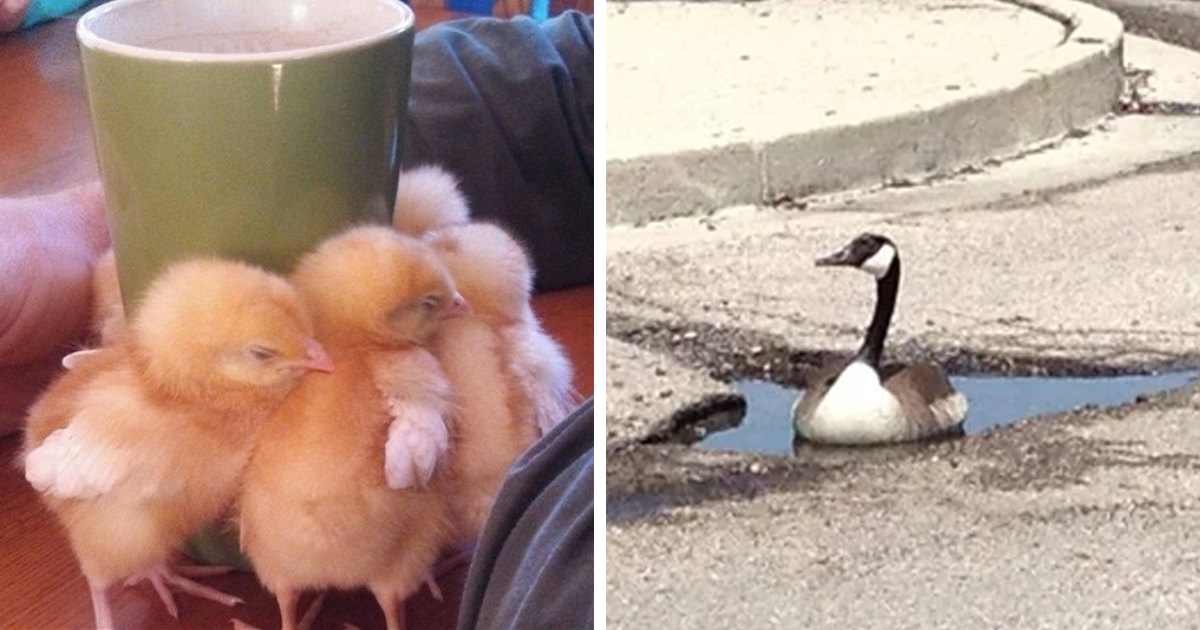 50 Times Birds Were So Funny, People Just Had To Snapchat Them
