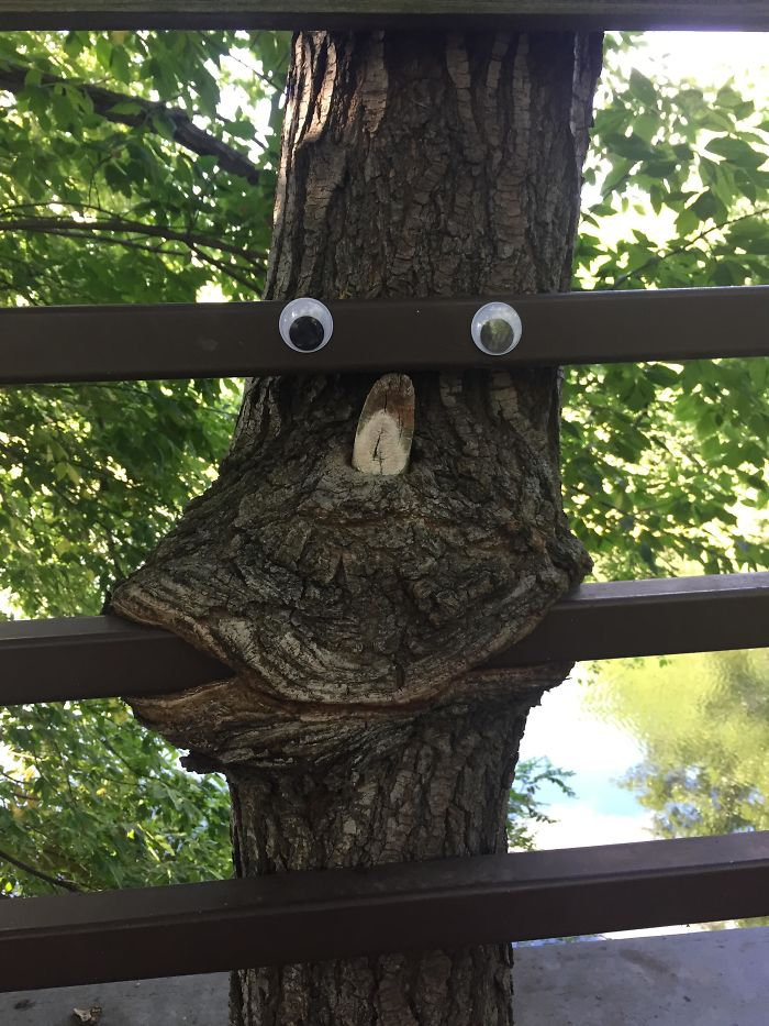 Someone Added Googley Eyes To This Tree Consuming A Bridge