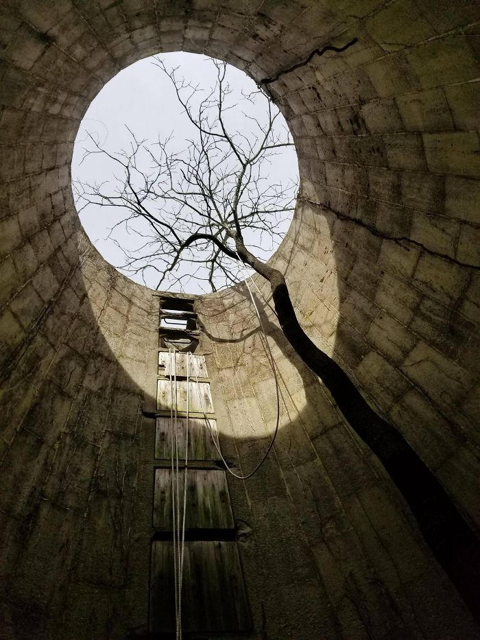 This Tree I Found Growing In An Old Silo