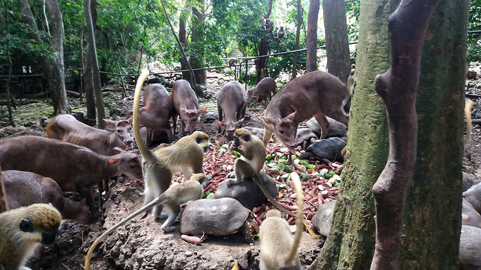 I Spent A Few Hours With The Animals At The Wildlife Reserve In Barbados