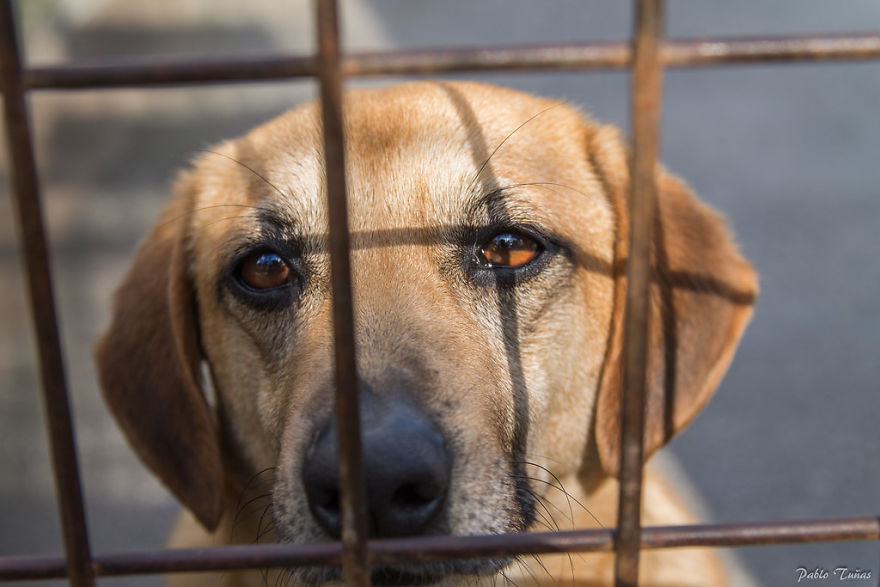 Russia Bans Animal Cruelty