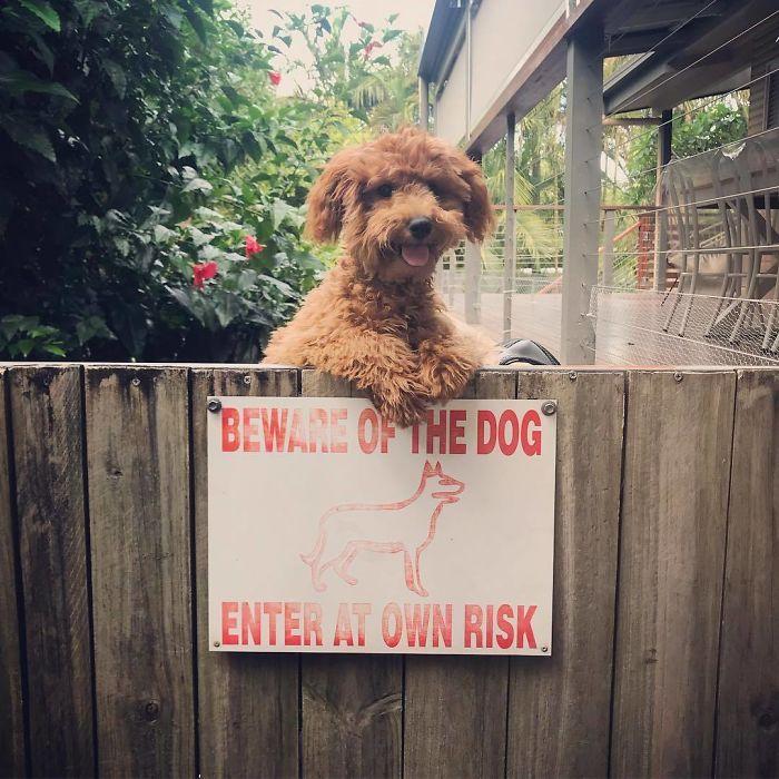 Dog Humor #3